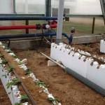 kazakhstan, hydroponic, heating system