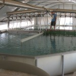Smart Farming, mass water flow system, aquaculture