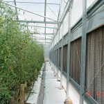 Smartfarming cooling by wet wall