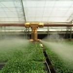 hydroponic gallery, cooling fogger