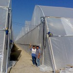 Turkey, net house, hydroponics