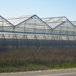 Smartfarming greenhouse with polycarbonate covering (1)