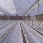 hydroponic gallery, ground cover