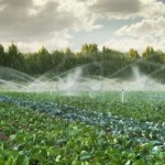 hydroponic gallery, outdoor overhead irrigation