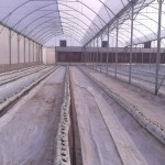 hydroponic gallery, various methods and crops