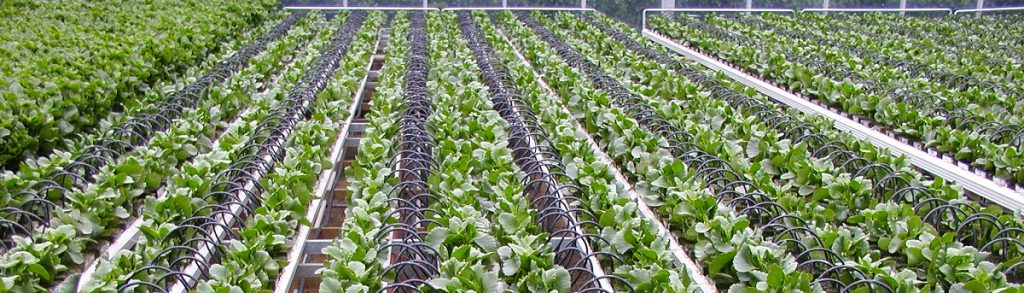 hydroponics south africa