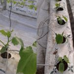 hydroponics supply system for plants