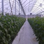 hydroponics system in south africa