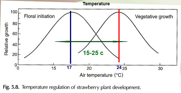 strawberry, hydroponic, Temperature Graph