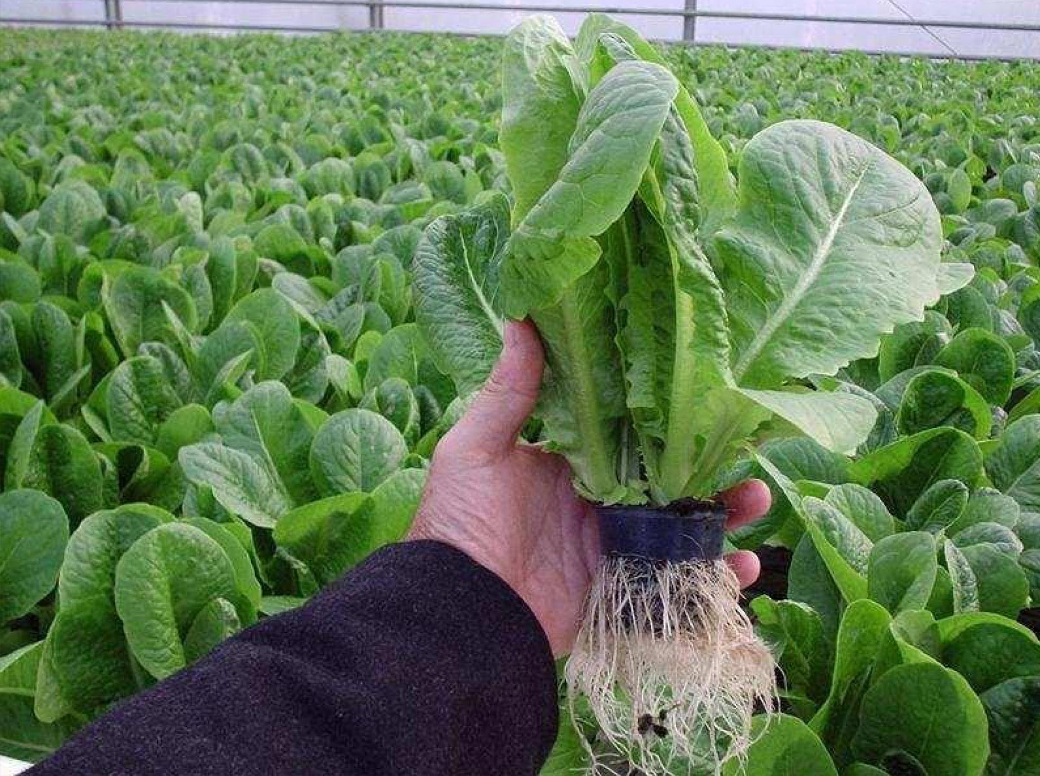Smart Farming Technologies Cc Automated Lettuce Farming